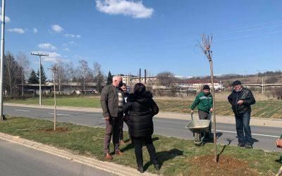 Се засадуваат украсни садници во Делчево